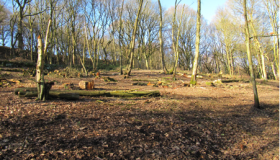 Calderdale Council Countryside & Woodlands Team: managing trees and moorland